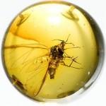 Янтарь (amber)